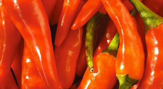 Masser af lækre chilier